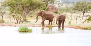 Dos elefantes Fotos de archivo libres de regalías
