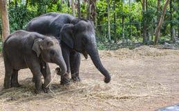 Dos elefantes del bebé en una instalación prisionera foto de archivo libre de regalías