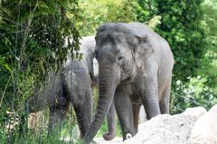 Dos elefantes en un fondo verde fotos de archivo