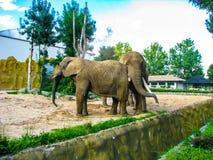 Dos elefantes lanzan la arena en uno a en día soleado foto de archivo libre de regalías