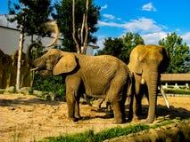 Dos elefantes lanzan la arena en uno a en d?a soleado fotografía de archivo