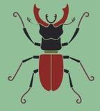 Dos escarabajos de macho Foto de archivo libre de regalías