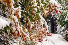 Dos estaciones - escena del invierno y del otoño en el parque Imágenes de archivo libres de regalías