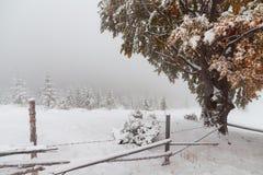 Dos estaciones - escena del invierno y del otoño en el parque Fotografía de archivo libre de regalías