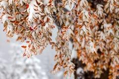 Dos estaciones - escena del invierno y del otoño en el parque Foto de archivo libre de regalías