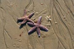 Dos estrellas Fotografía de archivo