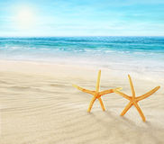 Dos estrellas de mar en la playa Imagen de archivo