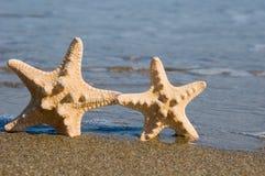 Dos estrellas de mar en la playa Fotografía de archivo