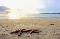 Dos estrellas de mar en la playa en la puesta del sol, una metáfora romántica Fotografía de archivo