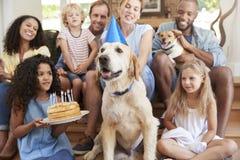 Dos familias que celebran cumpleaños del ½ s del ¿del dogï del animal doméstico en casa fotos de archivo