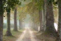Dos filas de árboles planos cualquier lado de un carril del país Imagen de archivo libre de regalías