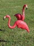 Dos flamencos rosados Imagen de archivo libre de regalías