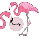 Dos flamencos rosados Ilustración del vector en el fondo blanco Nombre del flamenco en el círculo rosado Fotografía de archivo