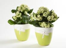 Dos flores fotos de archivo libres de regalías