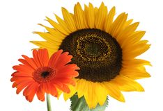 Dos flores Fotografía de archivo