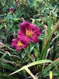 Dos flores Fotografía de archivo libre de regalías