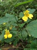 Dos flores amarillas Foto de archivo