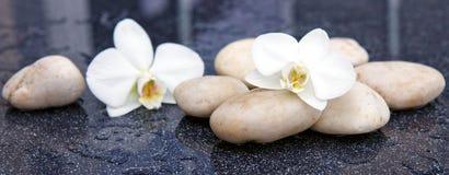 Dos flores de la orquídea y piedras blancas Imagen de archivo libre de regalías