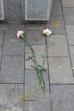 Dos flores del clavel en el piso de piedra Imagen de archivo