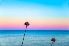 Dos flores delante de un cielo en colores pastel Imagen de archivo