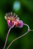 Dos flores divertidas Imágenes de archivo libres de regalías