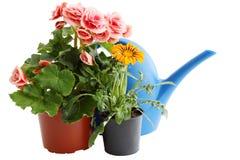 Dos flores en potes Foto de archivo
