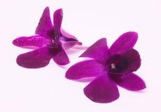 Dos flores rosadas Fotos de archivo libres de regalías