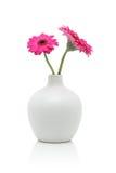 Dos flores rosadas del gerbera en el florero blanco Foto de archivo