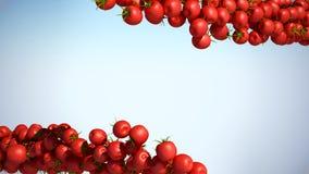 Dos flujos de la cereza de Tomatoe con el espacio para el texto Foto de archivo