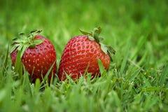 Dos fresas en hierba verde Imagen de archivo libre de regalías