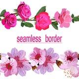 Dos fronteras inconsútiles de rosas rosadas brillantes y de flores delicadas de la primavera aisladas en el fondo blanco ilustración del vector