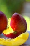 Dos frutas de los mangos Imagenes de archivo