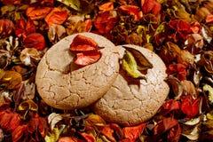 Dos galletas en fondo coloreado Fotos de archivo libres de regalías