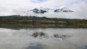 Dos gansos de Canadá almacen de metraje de vídeo