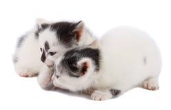 Dos gatitos Fotografía de archivo
