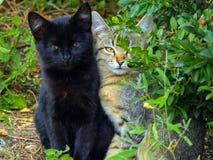 Dos gatitos Foto de archivo libre de regalías