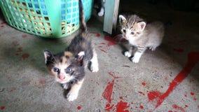 Dos gatitos fotos de archivo libres de regalías