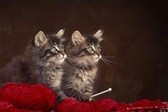 Dos gatitos de madera noruegos Fotografía de archivo