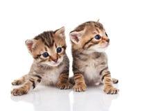 Dos gatitos del gato atigrado Foto de archivo