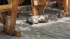 Dos gatitos divertidos que juegan debajo de la tabla en la terraza del verano metrajes