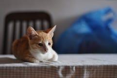Dos gatitos dulces en casa fotos de archivo libres de regalías