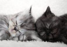 Dos gatitos el dormir Imagen de archivo libre de regalías