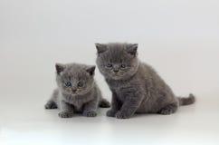 Dos gatitos en blanco Foto de archivo libre de regalías