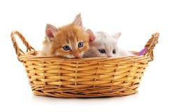 Dos gatitos en una cesta Imagenes de archivo