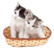 Dos gatitos en una cesta en un fondo blanco Fotografía de archivo libre de regalías