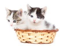 Dos gatitos en una cesta en un fondo blanco Foto de archivo libre de regalías