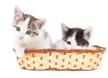 Dos gatitos en una cesta en un fondo blanco Foto de archivo