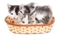 Dos gatitos en una cesta en un fondo blanco Fotos de archivo libres de regalías