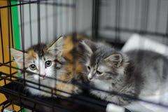 Dos gatitos en una jaula en un refugio para animales Fotografía de archivo