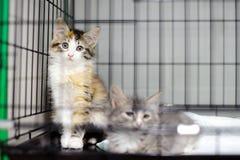 Dos gatitos en una jaula en un refugio para animales Foto de archivo libre de regalías